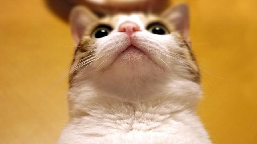 Портрет котейки снизу