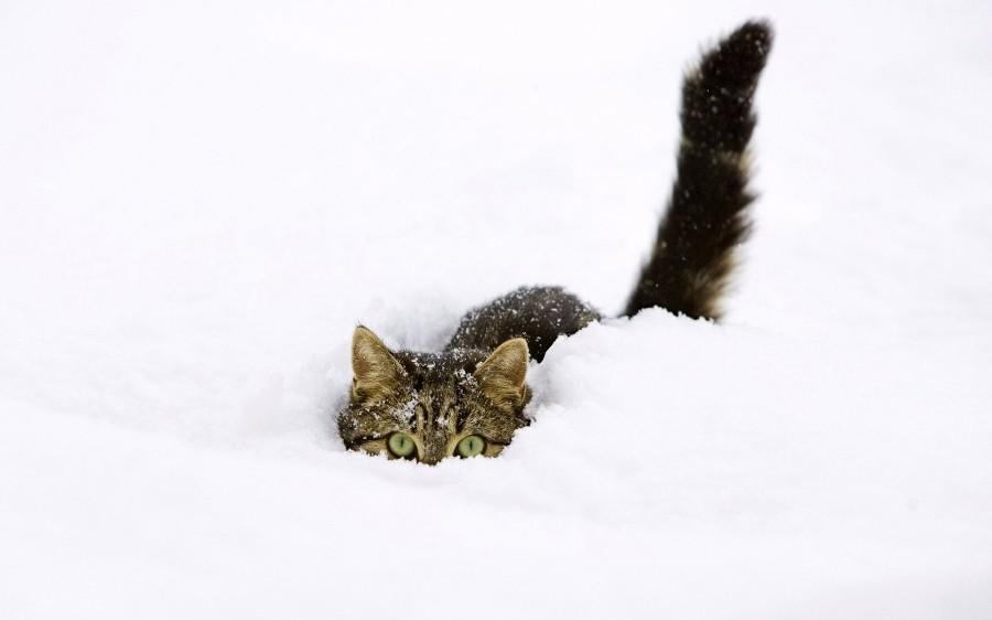 Котейка в сугробе