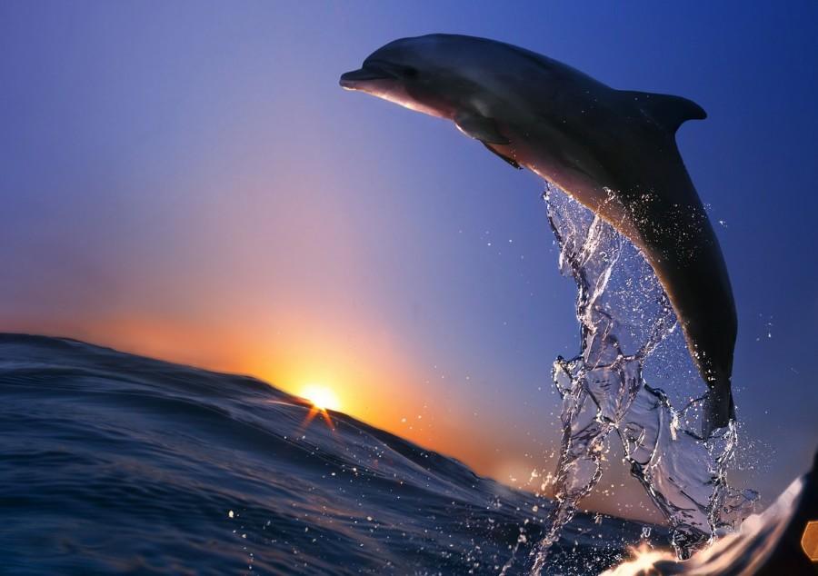 Дельфин в полете