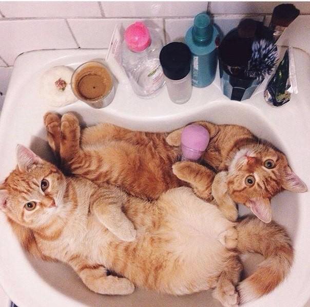 Идиллия в ванное 1
