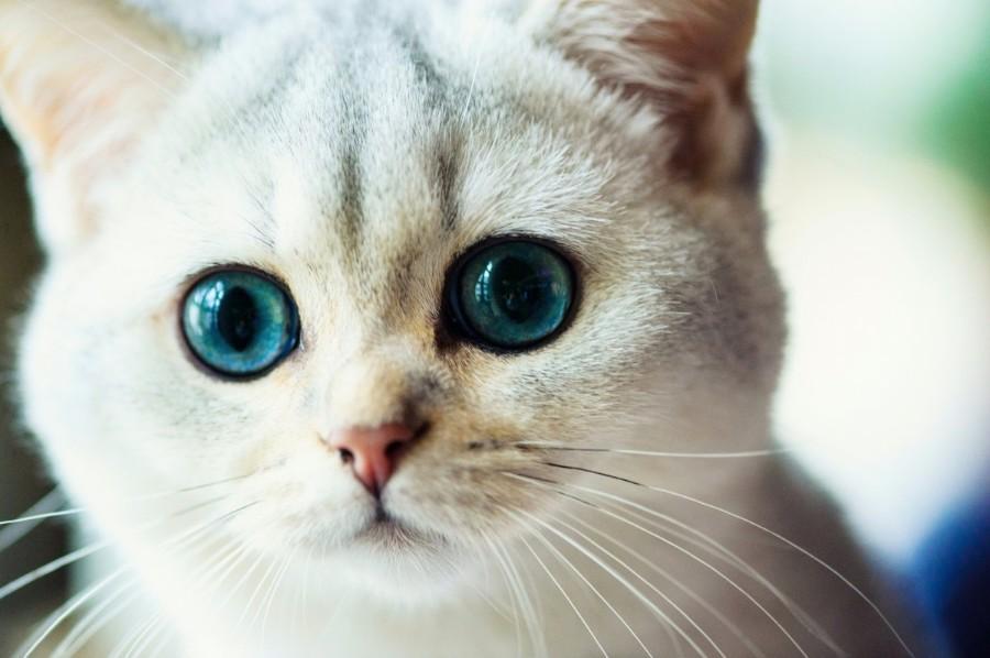 Красивые голубые глазки