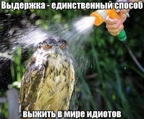 http://i4.imageban.ru/out/2016/05/26/dbb3fdd196612e2de8c801dbac2c96ca.jpg