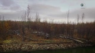 Discovery. Последние жители Аляски / The Last Alaskans [S02] (2016) HDTVRip 720p от HitWay | P1
