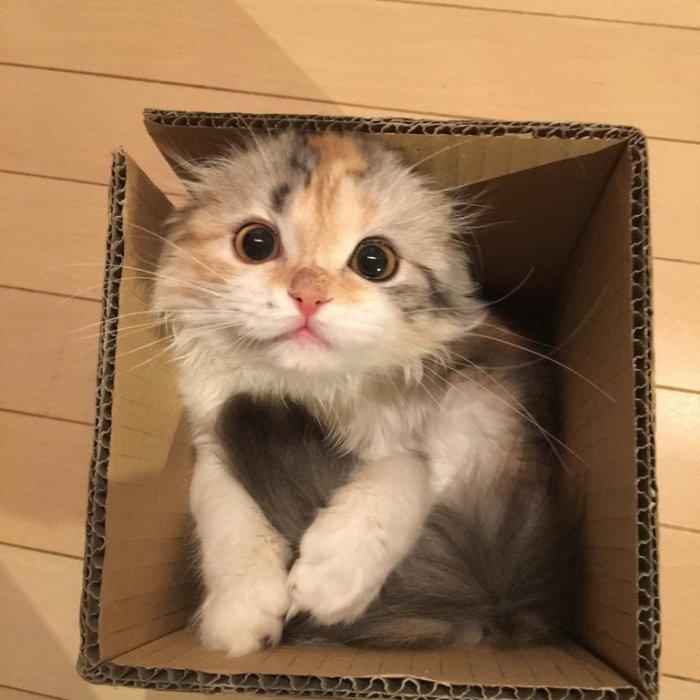 Новая коробочка 1