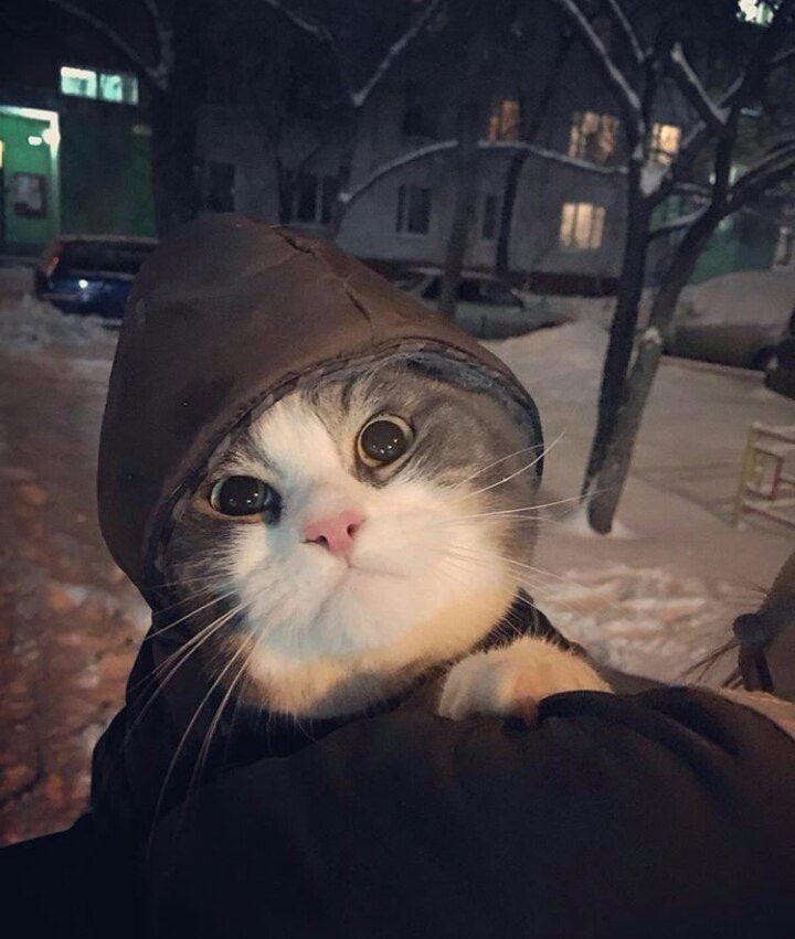 Котейка в капюшоне