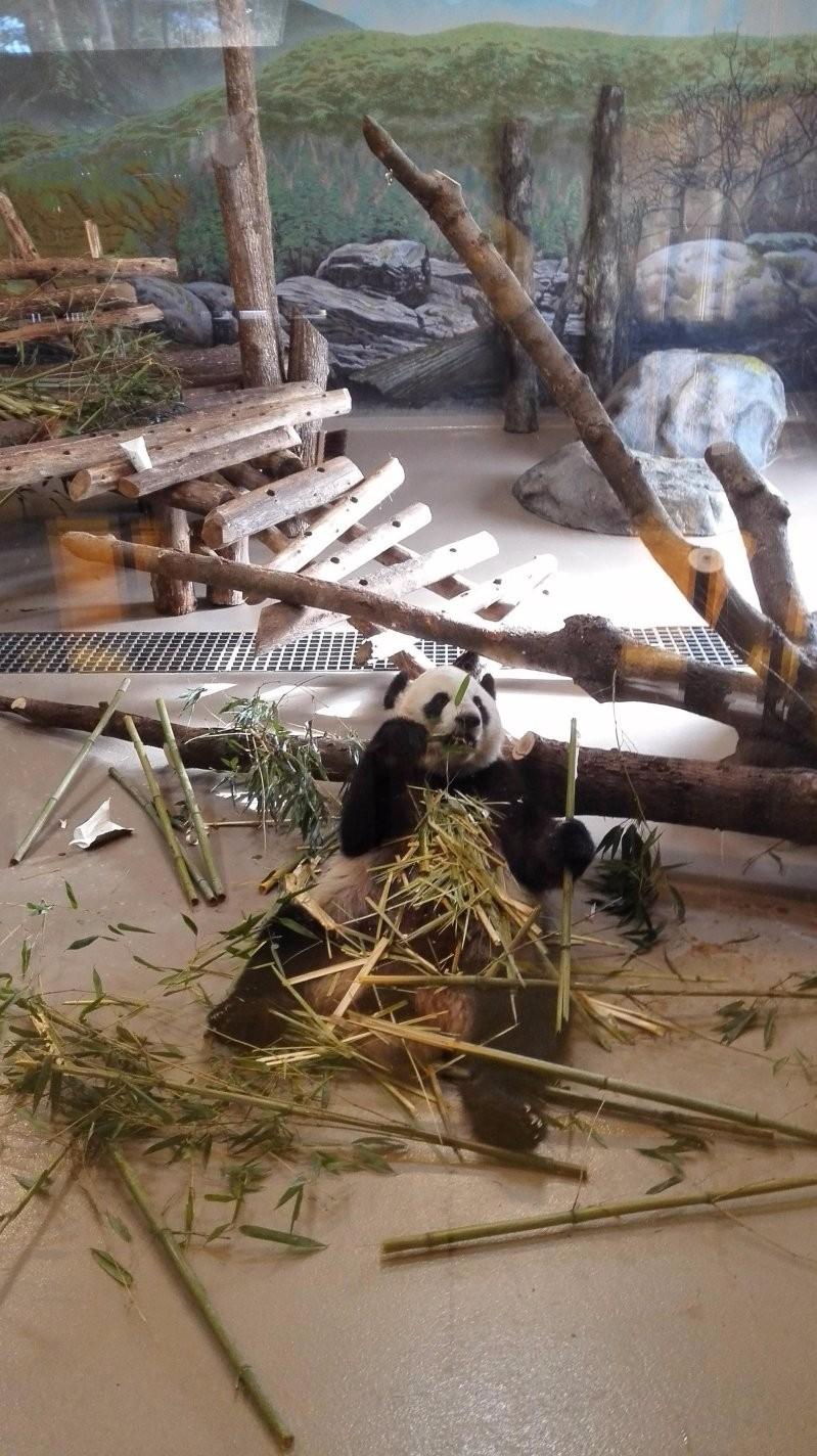 Жизнь одной панды