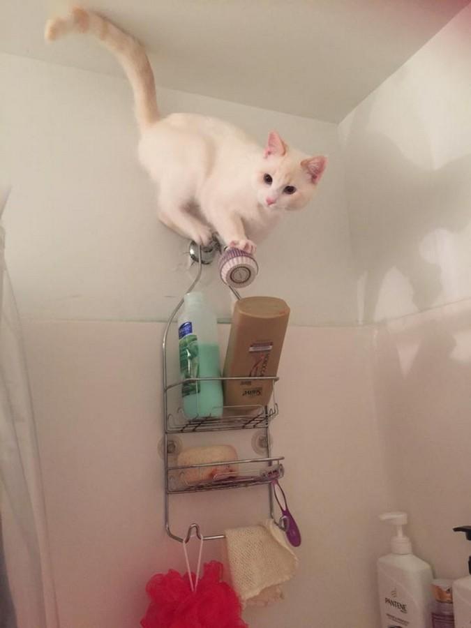 Белый котейка