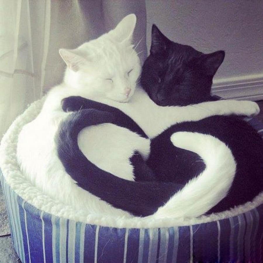 Про любовь