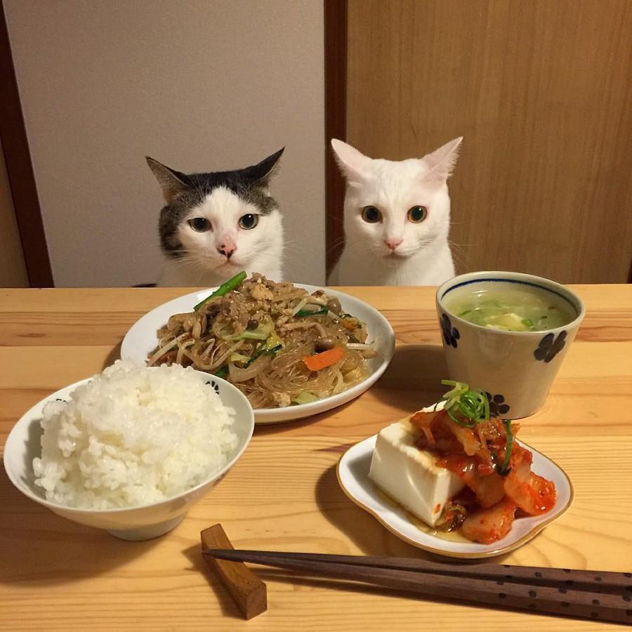 Воспитанные котейки