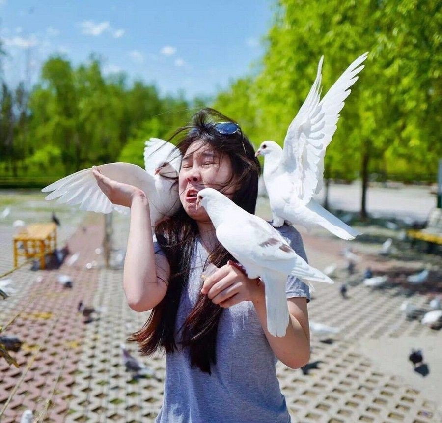 Про голубей