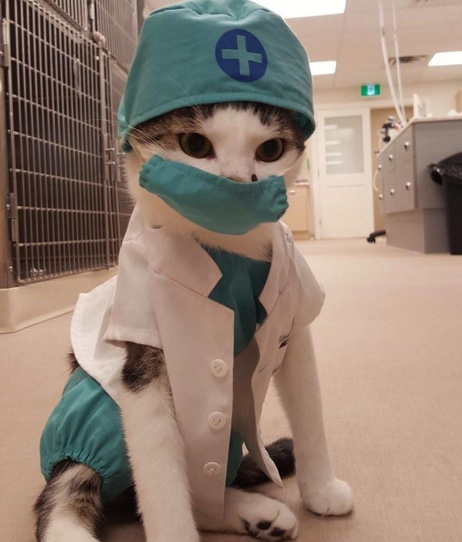 Кот-доктор