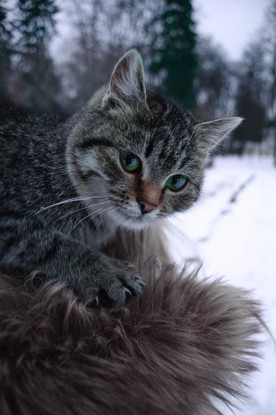 Снежный красавец