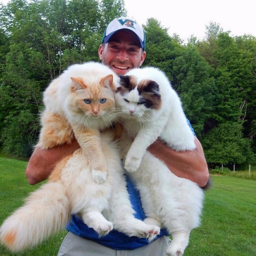 Здоровенные коты