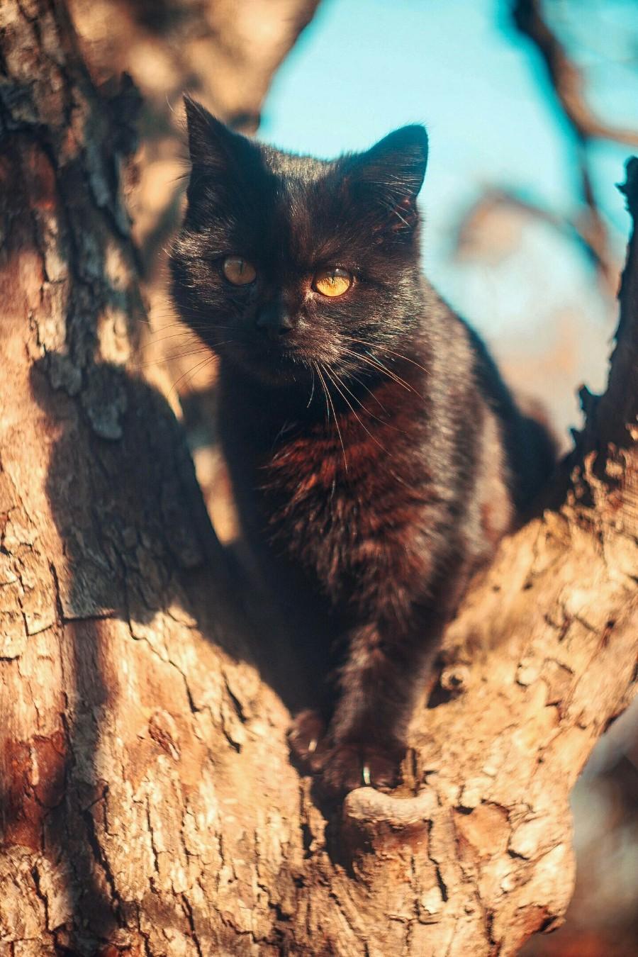 Черный котейка