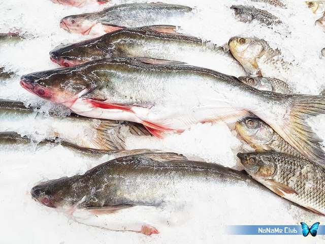 Растровый клипарт - Fresh Fish Set 11 [JPG]