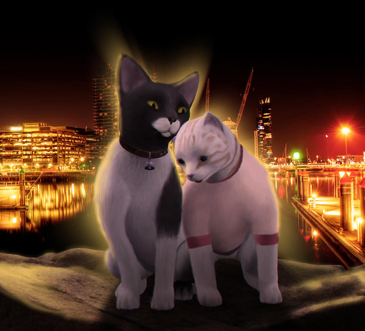 коты-4.jpg
