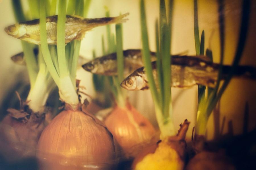 Плывущая рыбка