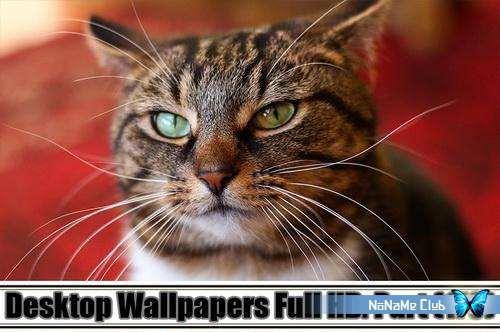 Обои - Desktop Wallpapers Full HD. Part (170) [JPG]
