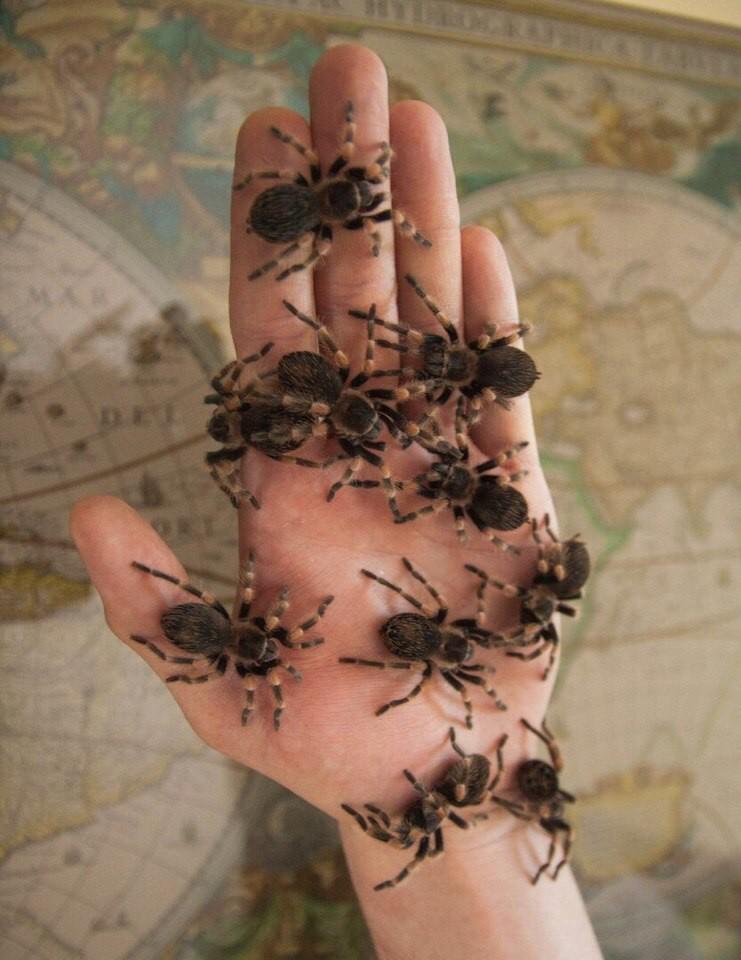 Маленькие пауки