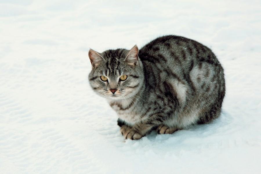 Котейка на снегу