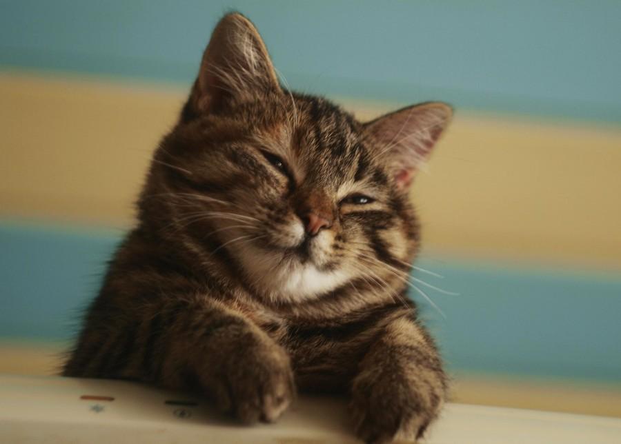 Довольный котейка