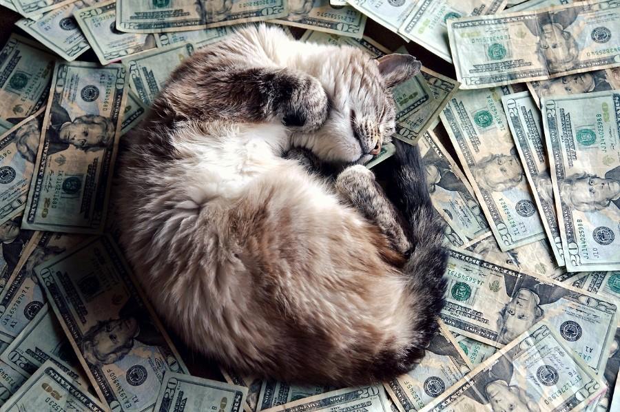 Богатый котейка