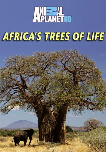 Animal Planet. Древо жизни / Africa's Trees of Life (2015) HDTV [H.264/1080i-LQ] (эпизоды 3 из 3)