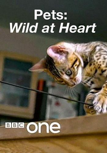 BBC: Питомцы - дикие в душе / Pets: Wild at Heart (2016) HDTVRip [H.264/1080p-LQ] (Серии 1-2 из 2)