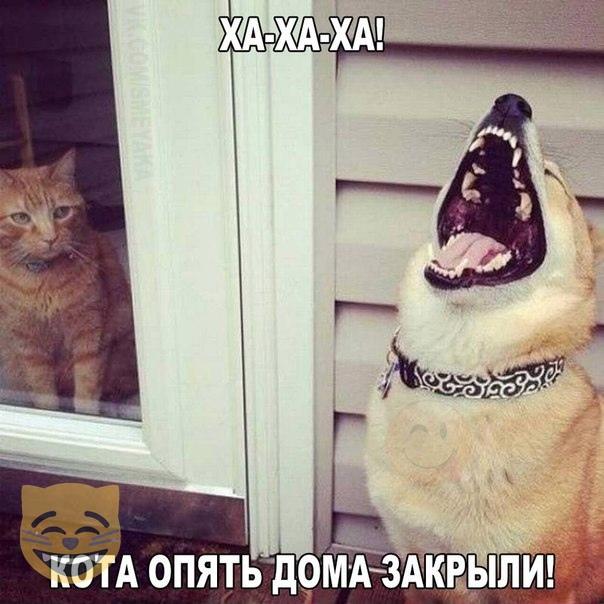 https://i4.imageban.ru/out/2019/03/06/80de36a0bce0be11030020ec41e59b22.jpg