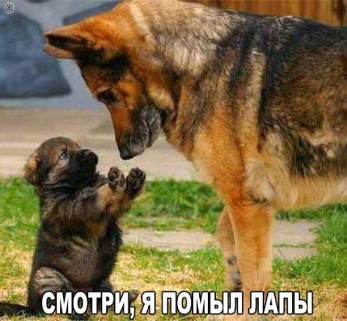https://i4.imageban.ru/out/2019/04/11/95a7e3b1bc0414948a4cabac510d42cf.jpg