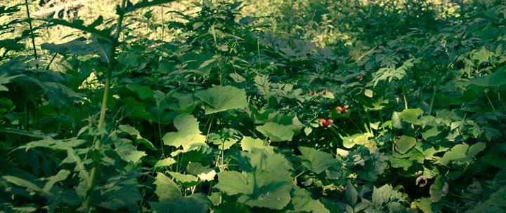 Minuscule.La.vallee.des.fourmis.perdues.2013.bdrip_[1.46]_[teko][(010741)19-12-19].PNG