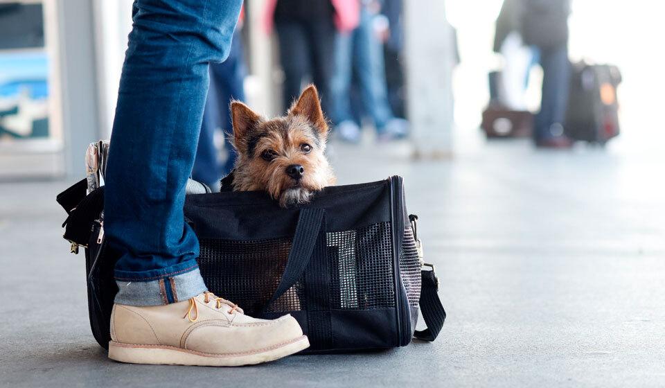 Как перевозить домашних животных. Что необходимо знать перед тем как оформить заказ такси