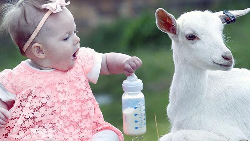 детское питание на козьем молоке