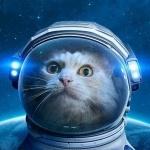 https://i4.imageban.ru/out/2020/06/07/50bf29ba0ca6f1d764fbb00659f44b28.jpg