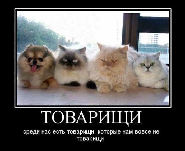 https://i4.imageban.ru/out/2021/03/06/2fc23a61a341d26c8ec62b32ecd2ac19.jpg