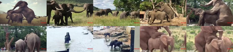 0216_FUN_Elephant_Breeding_How_Do_Elephant_Mating_Real_Video_Wild_Animals_Compilation.jpg