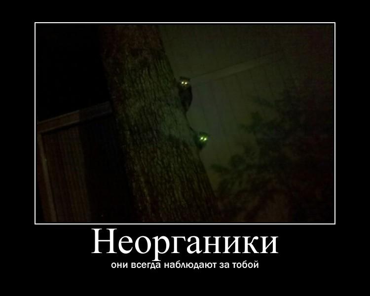 https://i4.imageban.ru/out/2021/07/17/29a49a536deac6270719d25ec3794ebb.jpg