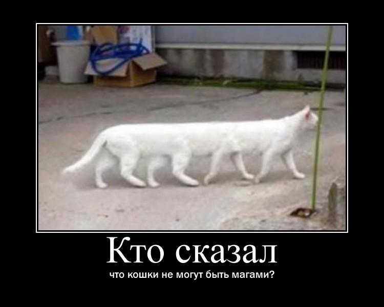 https://i4.imageban.ru/out/2021/07/17/3aa571a330d4916d403eaa530e5b0892.jpg