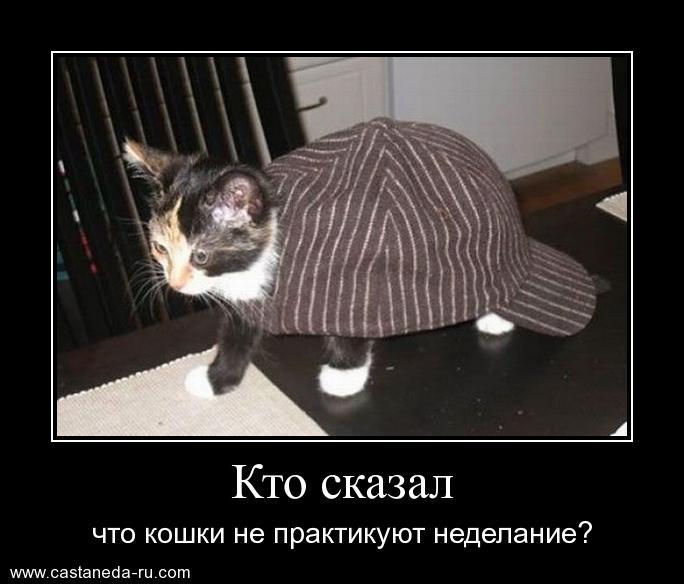 https://i4.imageban.ru/out/2021/07/17/5c2ed5c2141c86c2f1052580ad5ab969.jpg