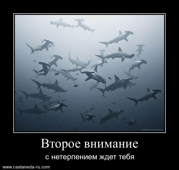 https://i4.imageban.ru/out/2021/07/17/6618a9cd327c77e6f7b14ce719319abb.jpg