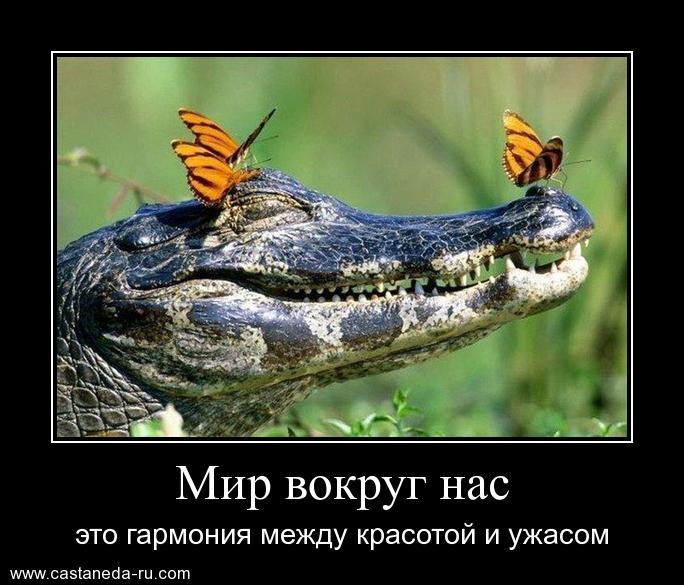https://i4.imageban.ru/out/2021/07/17/d6bba6ff8f8d435b8115e1f61ad1739d.jpg