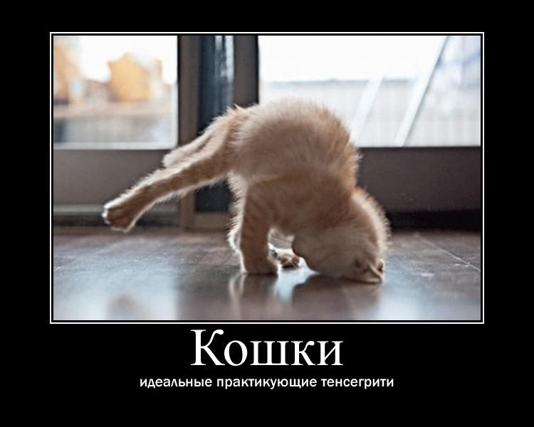 https://i4.imageban.ru/out/2021/07/17/d9cc90fe4908a68d484f9db9abd063e1.jpg