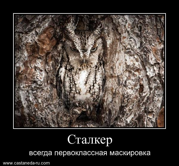 https://i4.imageban.ru/out/2021/07/17/e174b3b9026da195ee17400c79c2035b.jpg