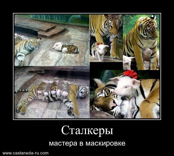 https://i4.imageban.ru/out/2021/07/17/ea07b667dc5931b85077892685842f1a.jpg