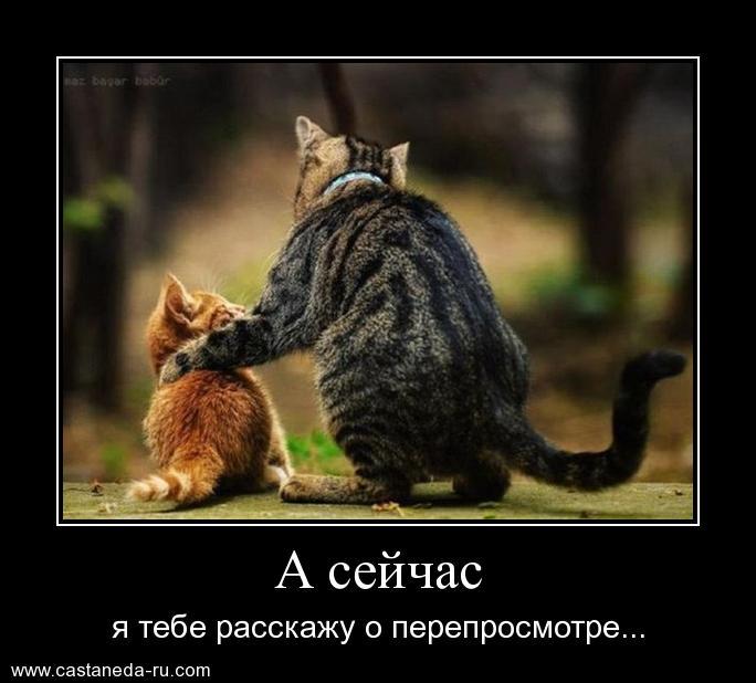 https://i4.imageban.ru/out/2021/07/17/ed6f8f1f467b6b09b7c2af3a7f1967aa.jpg