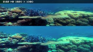 Чудеса океана в 3Д / Ocean Wonderland 3D  Вертикальная анаморфная