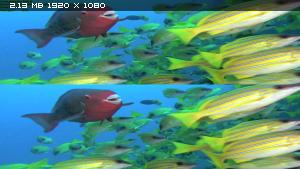 Коралловый риф - Том 3: Охотники и добыча в 3Д / Faszination Korallenriff 3D - Vol. 3: Jäger & Gejagte 3D Вертикальная анаморфная