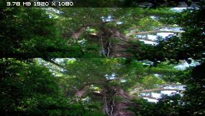 Скрытая жизнь дождевого леса в 3Д / The Secret Life of the Rainforest 3D Вертикальная анаморфная