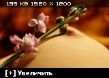http://i4.imageban.ru/thumbs/2014.01.26/97d1d1645369b0be49999e2c3eba425d.jpg