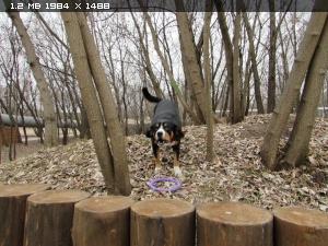 http://i4.imageban.ru/thumbs/2014.11.24/ff56e2018c49703be7551e2b4227e8ae.jpg